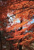 20191129-1206名古屋紅葉行:IMG_0383.JPG