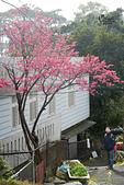 20130202陽明山櫻花:DSCN1918.JPG