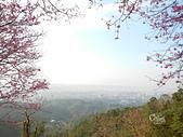 20140203土城太極嶺櫻花:DSCN6963.JPG