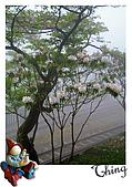20100328-0329阿里山賞櫻:IMG_6238.JPG