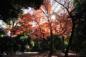 20161201-1206日本東京銀杏+河口湖富士山:IMG_7296.JPG