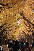 20161201-1206日本東京銀杏+河口湖富士山:IMG_7280.JPG