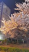 20180330-0410韓國賞櫻(上):20180331_202149.jpg