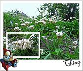 20100328-0329阿里山賞櫻:IMG_7115.JPG