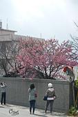 20130126平等里櫻花:DSCN1834.JPG
