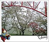 20100328-0329阿里山賞櫻:IMG_6292.JPG