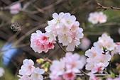 20130224中正紀念堂櫻花:IMG_9492.JPG