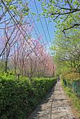 20130228陽明山櫻花:IMG_9590.JPG