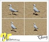 20101230-20110104 Melbourne:IMG_2808.jpg