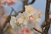 20140301十八份櫻花:IMG_9578.JPG