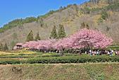 20130217武陵農場:IMG_9257.JPG