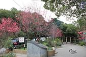 20130202陽明山櫻花:IMG_7661.JPG