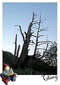 20100328-0329阿里山賞櫻:IMG_6366.JPG