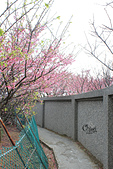 20130126平等里櫻花:IMG_7540.JPG