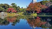 20171124-1128日本東京銀杏:20171125_102114.jpg