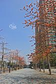 20130310板橋車站木棉花:IMG_1099.JPG