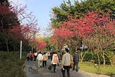 20130214中正紀念堂櫻花:IMG_8173.JPG