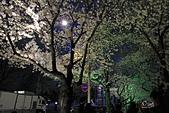 20180330-0410韓國賞櫻(下):IMG_2982.JPG