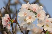 20140301十八份櫻花:IMG_9580.JPG