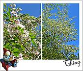 20100328-0329阿里山賞櫻:IMG_6539.JPG