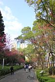 20130214中正紀念堂櫻花:IMG_8191.JPG