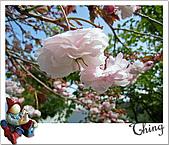 20100328-0329阿里山賞櫻:IMG_6584.JPG