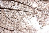 20180330-0410韓國賞櫻(上):IMG_2074.JPG