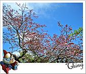20100328-0329阿里山賞櫻:IMG_6593.JPG