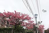 20130126平等里櫻花:IMG_7550.JPG