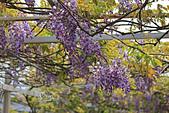 20140406紫藤咖啡園:IMG_0529.JPG