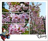 20100328-0329阿里山賞櫻:IMG_6599.JPG