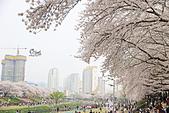20180330-0410韓國賞櫻(上):IMG_2174.JPG
