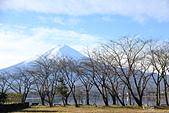 20161201-1206日本東京銀杏+河口湖富士山:IMG_8149.JPG