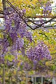 20140406紫藤咖啡園:IMG_0532.JPG