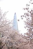 20180330-0410韓國賞櫻(下):IMG_3192.JPG