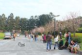 20130214中正紀念堂櫻花:IMG_8476.JPG