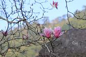 20170219楓樹湖木蘭花:IMG_8688.JPG