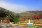 20130202陽明山櫻花:IMG_7922.JPG