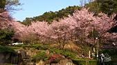20130309陽明山北投三芝櫻花:DSC_0635.jpg