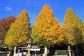 20171124-1128日本東京銀杏:IMG_0728.JPG