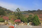 20130202陽明山櫻花:IMG_7927.JPG