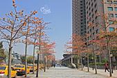20130310板橋車站木棉花:IMG_1056.JPG