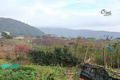 20130202陽明山櫻花:IMG_7779.JPG