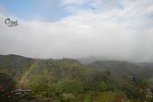 20130202陽明山櫻花:DSCN1951.JPG