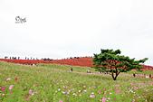 20191017-1023日本東京掃帚草:IMG_8935.JPG