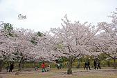20180330-0410韓國賞櫻(下):IMG_2955.JPG
