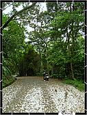20100422土城三峽桐花:IMG_7210.JPG