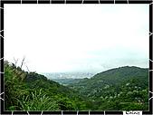 20100422土城三峽桐花:IMG_7225.JPG