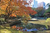 20171124-1128日本東京銀杏:IMG_0539.JPG