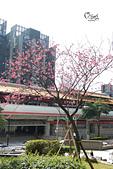 20130204唭哩岸櫻花:DSCN2106.JPG